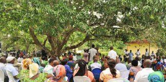 Il y a 74 ans, le Syndicat agricole africain d'Houphouët-Boigny était créé sous ce colatier à Agboville