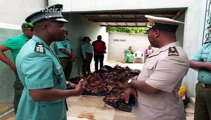Saisie de viande de brousse à Anyama