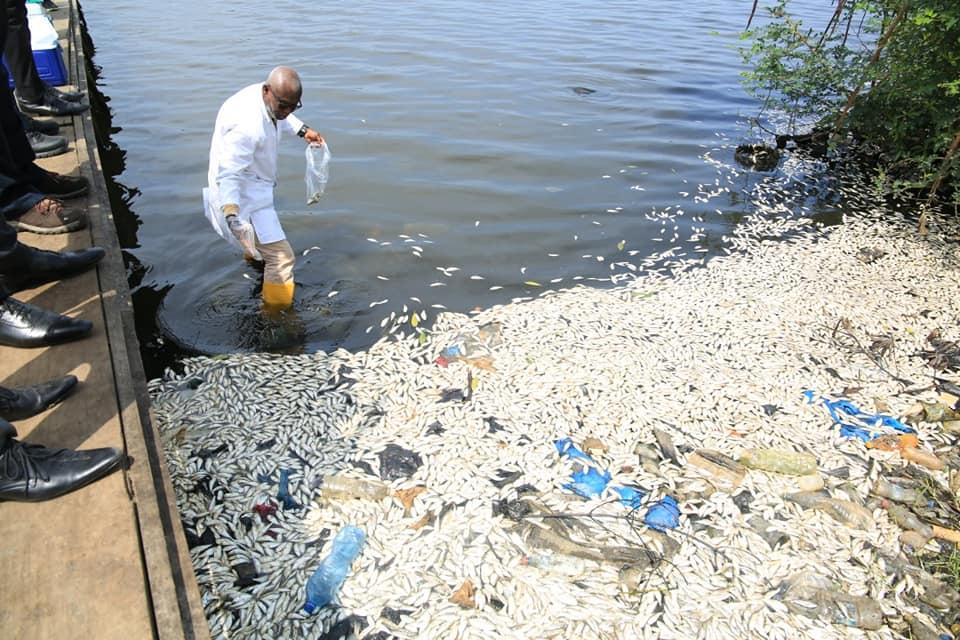 Des milliers de poissons retrouvés morts à Port-bouët